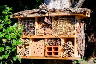 Fabrication d'un hôtel à insectes